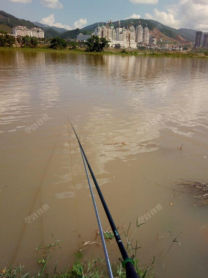 我下了一只5.4米竿,因为水流大,我用大跑铅底钓,钓了一个小时左右,只见漂慢慢的升起了,我就提竿,鱼在水下拼命挣扎我还以为上鲤鱼了呢