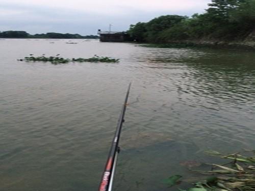 夏季野塘釣鯽魚的兩招技巧,學會收獲好