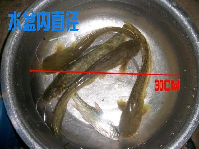 钓鲶鱼的两条重要经验,分享给各位钓友