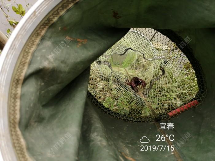 大龙虾🦞🦞