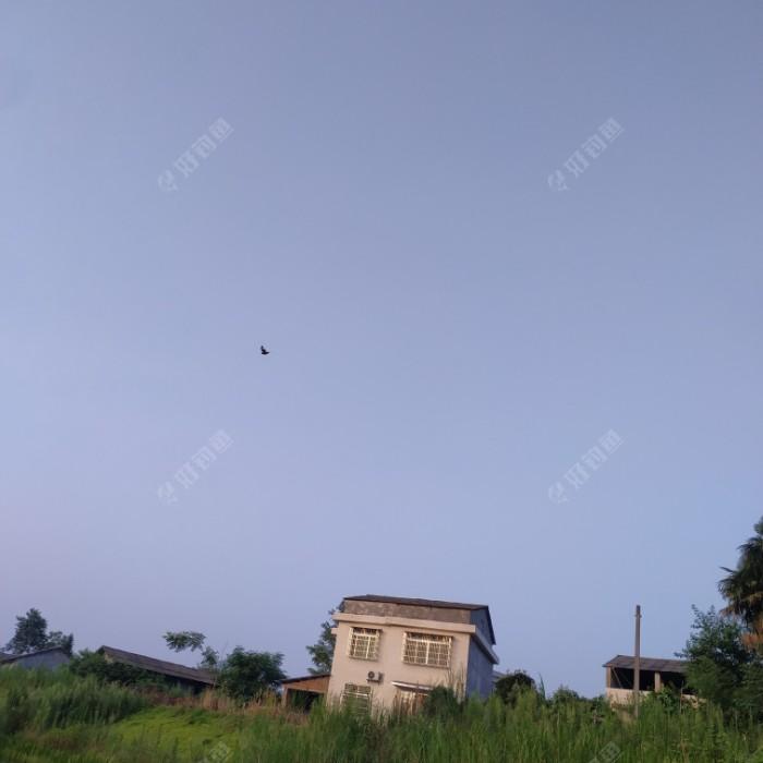 天上飞的是什么?天上飞的是喜鹊!喜鹊喳喳叫,那是心情好哎!喜鹊喜鹊你慢慢飞哎,飞到鹊桥歇一歇,阿妹马上就来到哎,一起陪你到白头!