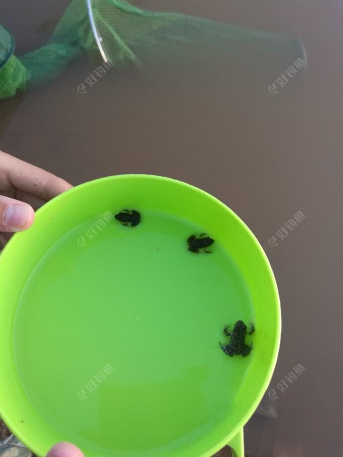 把饵料放在石头上又去捉青蛙,我的饵料盆成了她青蛙的乐园了
