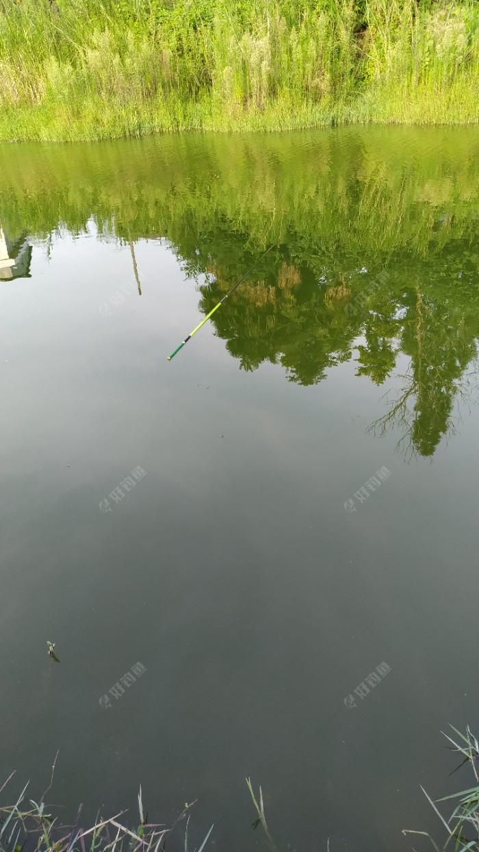 一直无口,于是拿出手机,交了一下水费,再看时,鱼竿被鱼钓到水中央了。