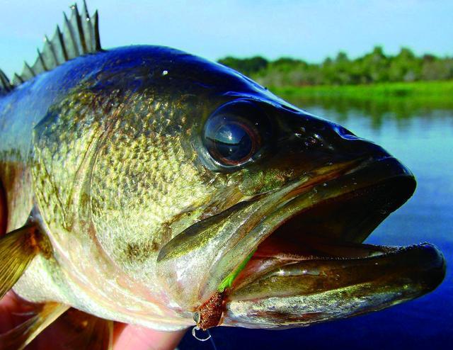 夏季钓鲈鱼,你需要知道点额外的技巧