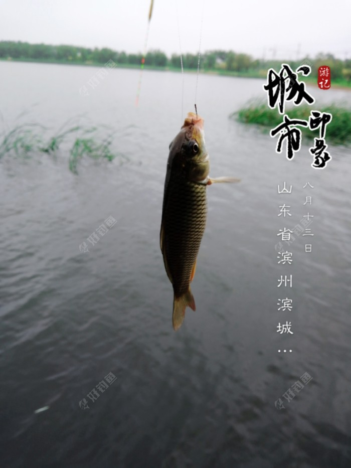 开杆小鲤鱼来了,集赞了一星期的毒,消了不少。