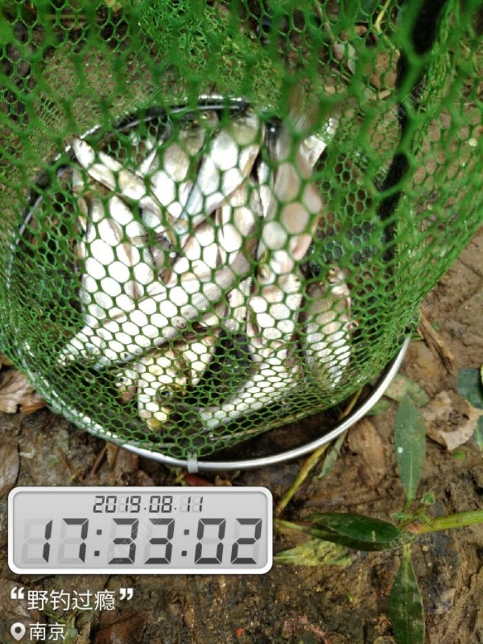 最后鱼获,不太理想。