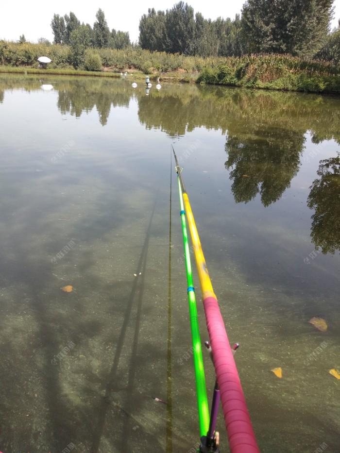 平台金钓客龙纹鲤鱼竿。霸气涂装