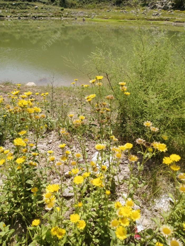 一年一度秋风劲,战地黄花分外香。随着秋菊的绽放,秋天真来了。