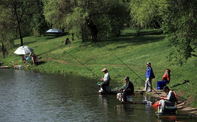 立秋后的野釣鯽魚技巧,三招學會釣大鯽魚