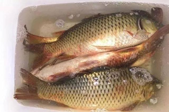 中秋為何釣魚人都會收藏月餅?現在才知道其中的玄機