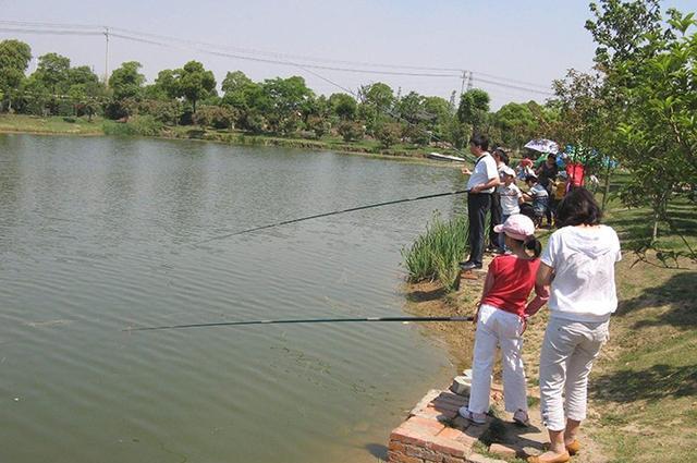 黑坑钓鱼套路分享,掌握这些新手也能钓好鱼