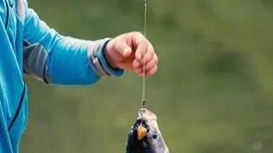 鱼线选择是钓鱼关键!看这里面有些学问