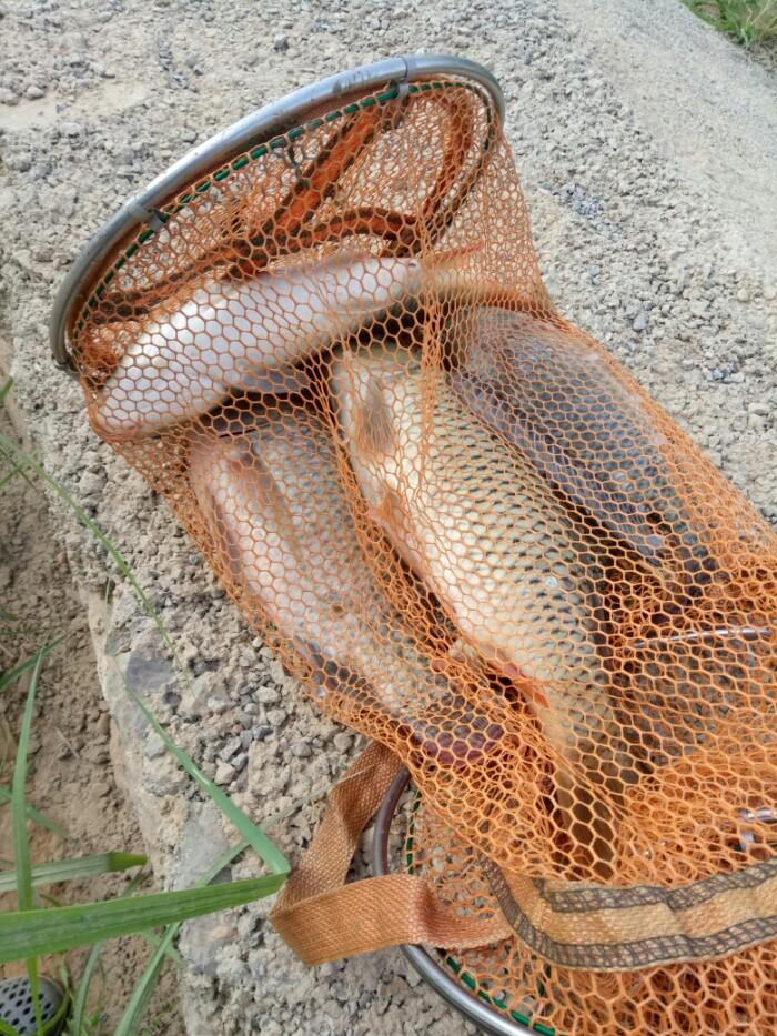 昨夜的鱼获,大丰收!