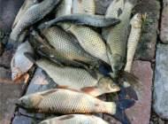 入冬前会大肆摄食的鱼种,告诉你秋季钓什么鱼