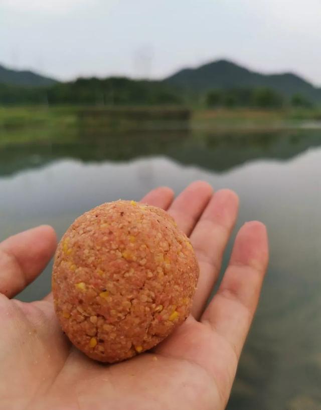 在家自制一款商品餌,秋釣鯉魚經濟又好用