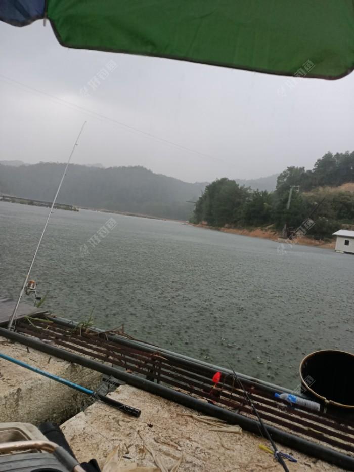 看看这雨多大,抛竿六根,鱼饵料就一桶, 😓这个有点夸张了,八斤的浮颗粒,一下开了六斤, 😱别人以为我是喂猪🐷的,不是钓鱼🐠的