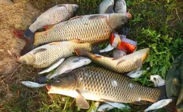 调漂技巧:简单明了的无钩调漂方法,秋季钓大鱼就这么调漂