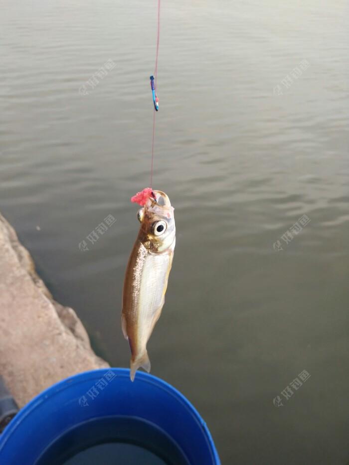 开张鱼,吃饵不成反被捉