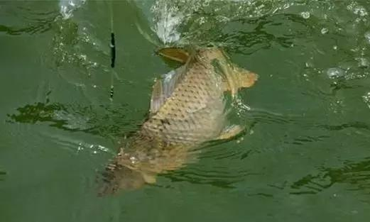 溜鱼技巧,钓大鱼必备