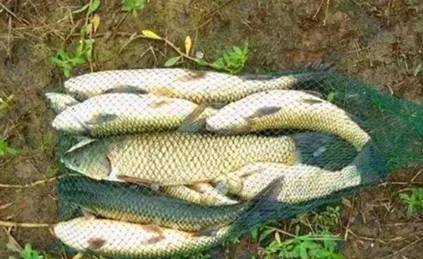 深秋搏大鱼的4个制胜要点,大鱼现在不钓,就要等明年