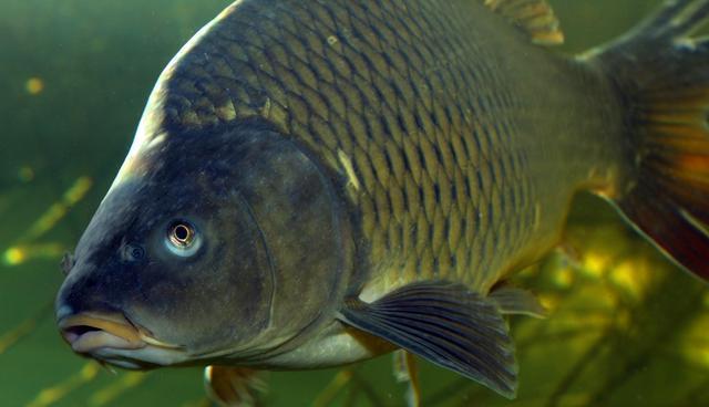 秋末冬初季节交替,鱼儿不吃钩的5大特征插图(3)