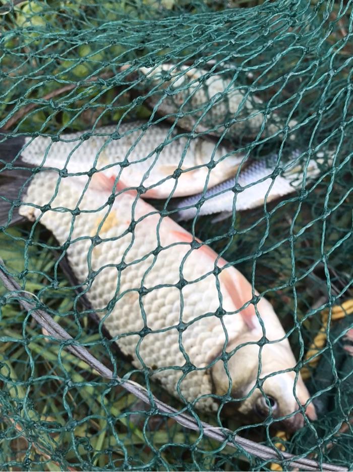 今天的鱼获,好歹没空军。