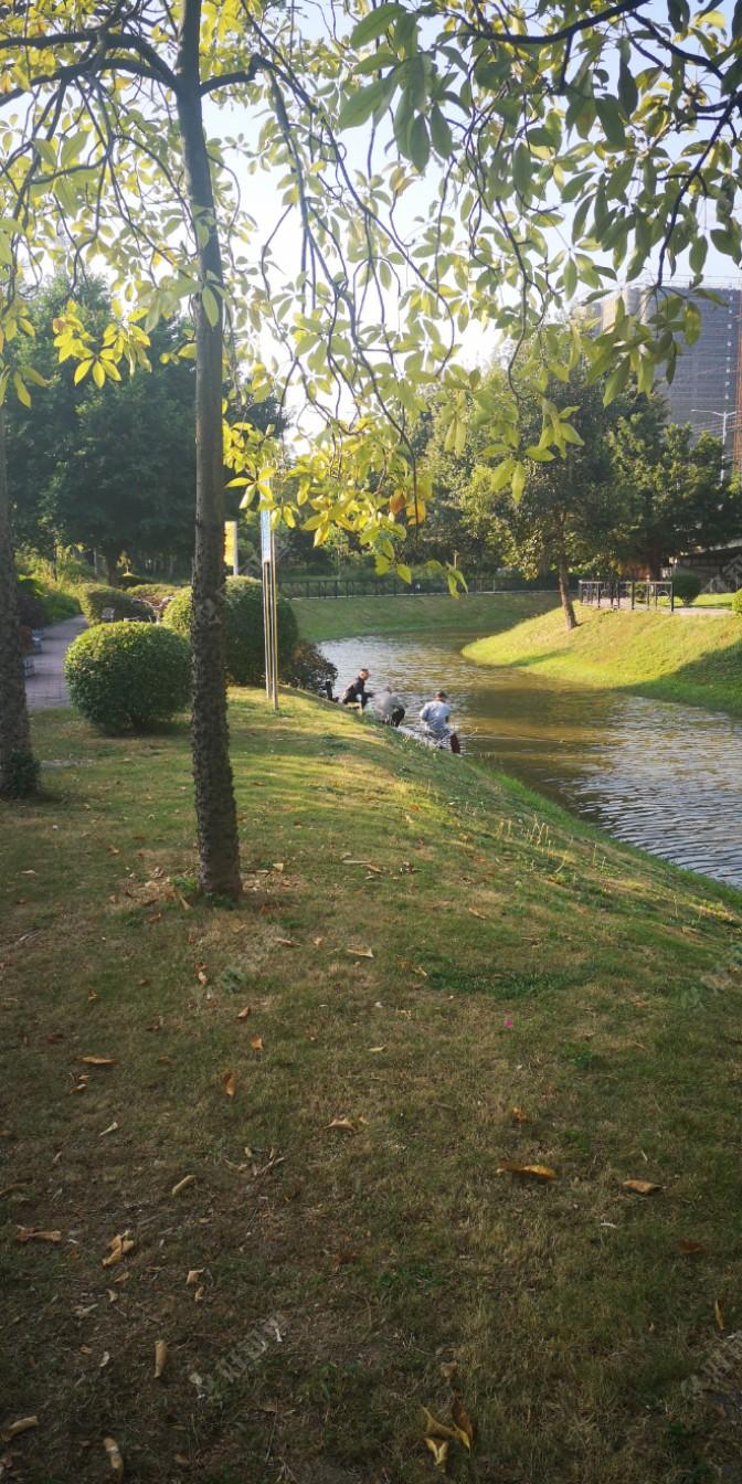 转过了弯弯的小路一看,哇塞,交友们已经全到了,他们都在聚精会神的钓鱼。