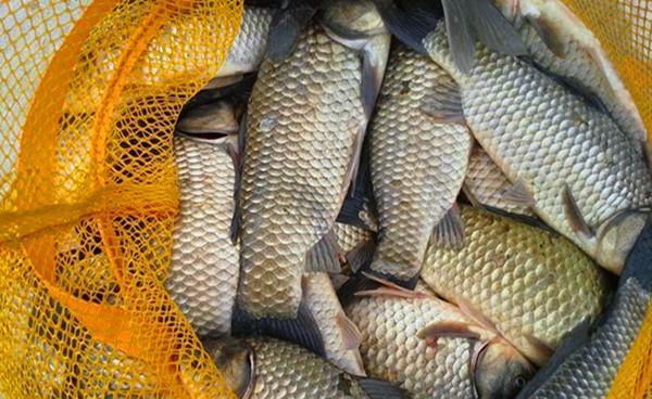 初冬钓鲫鱼,钓点应该这样选,找鱼而钓才是取胜之道
