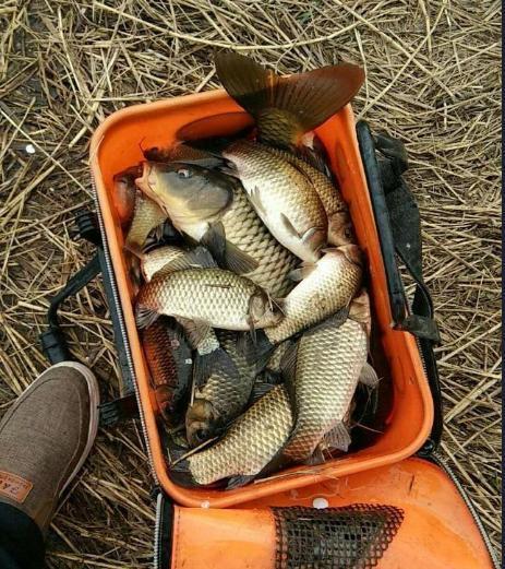 冬季钓鱼该怎么开饵,有什么料搭配教程