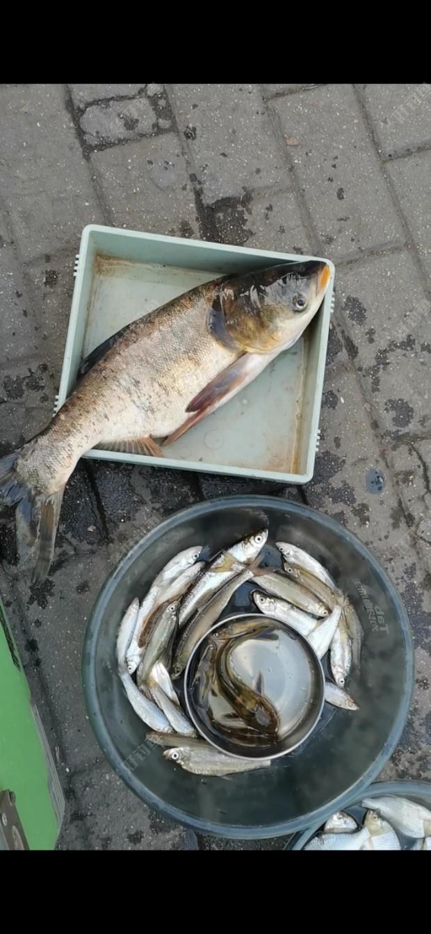 [四周年]老钓点寻鱼,饵料疯了,大鱼小鱼全疯了!