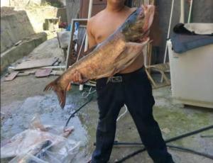 长江峡谷钓鱼,钓获一条10斤胖头鱼