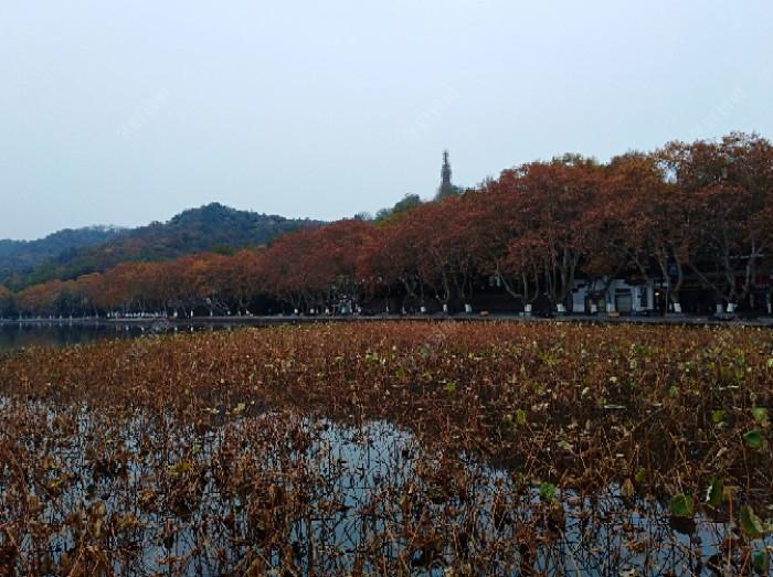 里湖秋冬景镇贴