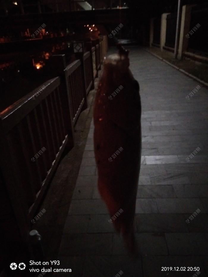 作钓一小时才上一小板,以后再无鱼口