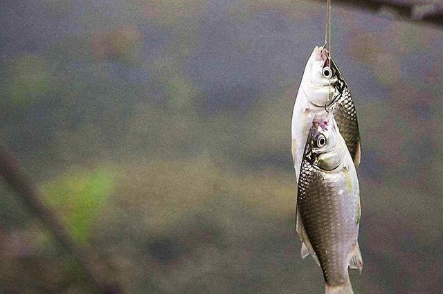 想要提升中双尾鱼的几率,就从这几点入手