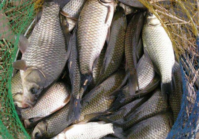 冬季钓鱼这样做窝,诱鱼快留鱼久