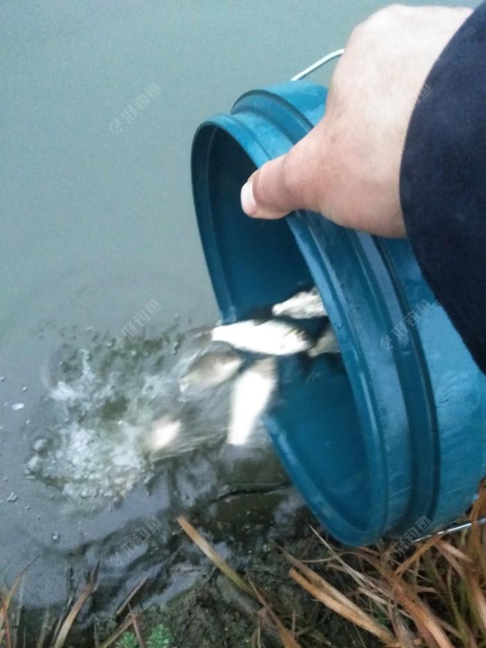 抓大放小,真不是装逼实在怕杀鱼,腰会断的!