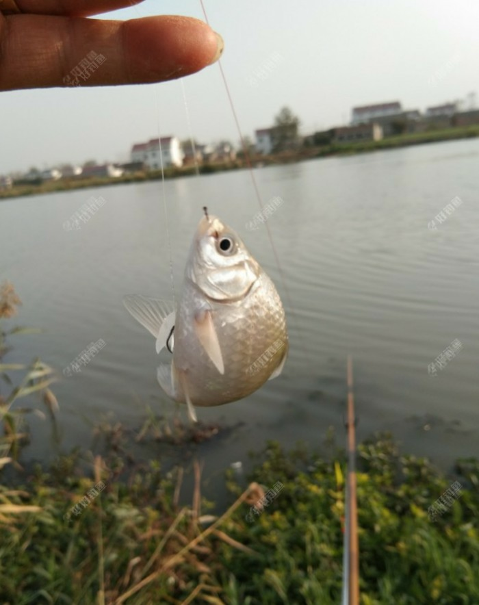 鱼口轻的难以置信,现在钓鱼疑似就提竿