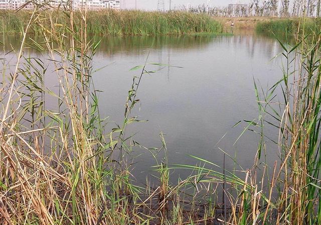 野河钓鱼,遇水草较多时,钓友要注意这几点