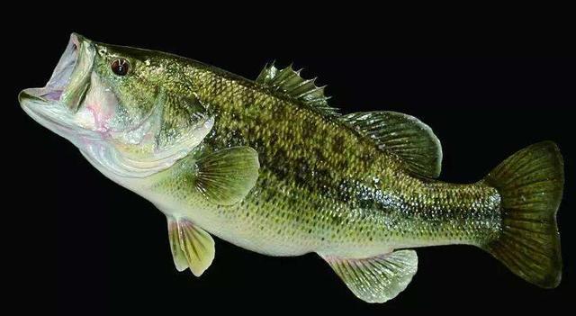 鱼类的残暴程度有多大?随意捕杀同类,六亲不认(图6)