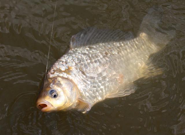 鱼儿顶票提竿不上鱼,多半是这些问题导致