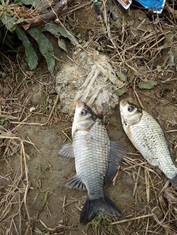 钓鱼时这几种钓况别死守,稍微变通渔获明显提升