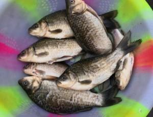 疫情当前,钓鱼来解