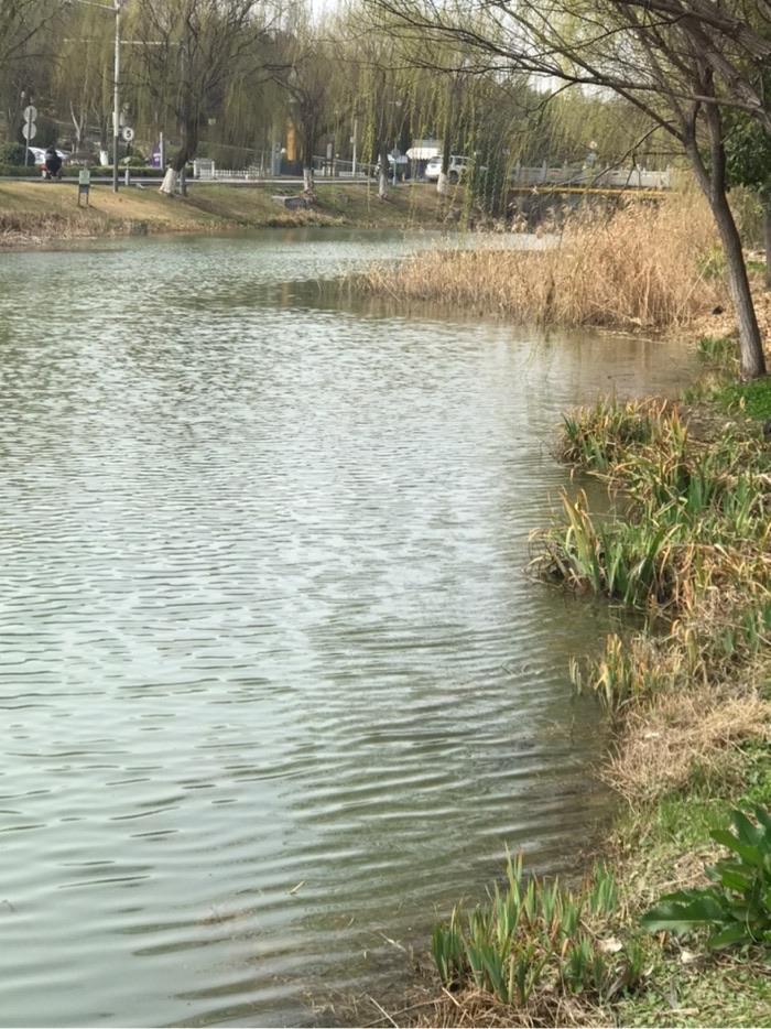 这个地方可以钓鱼了。