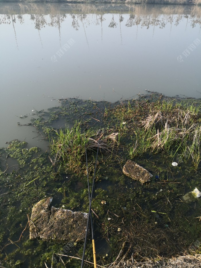 而定,远处水深有1.5米左右,近处水深在50—80公分左右。等醒窝时,开始组装钓具,今天准备用两根鱼竿垂钓,一根12米,传统钓,钓远点地方,另一根5.4米,钓近