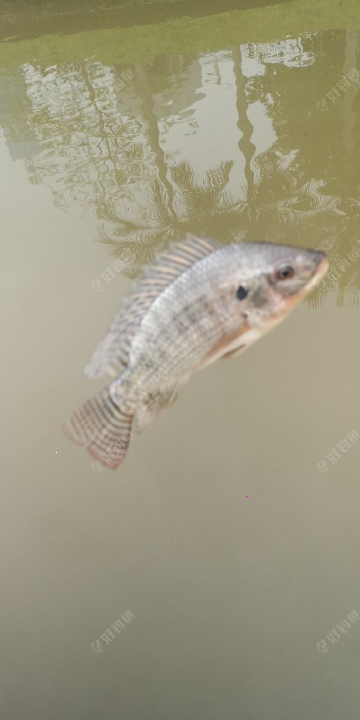 好友聚河邊,大魚連連,又一次爆護