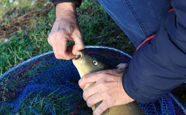 夏季釣魚不想走空,推薦你看看這些,打窩用餌小貼士