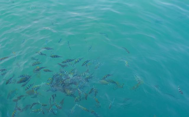 如何挂颗粒钓鱼_何种情况鱼儿会改变水层,改变水层如何聚鱼