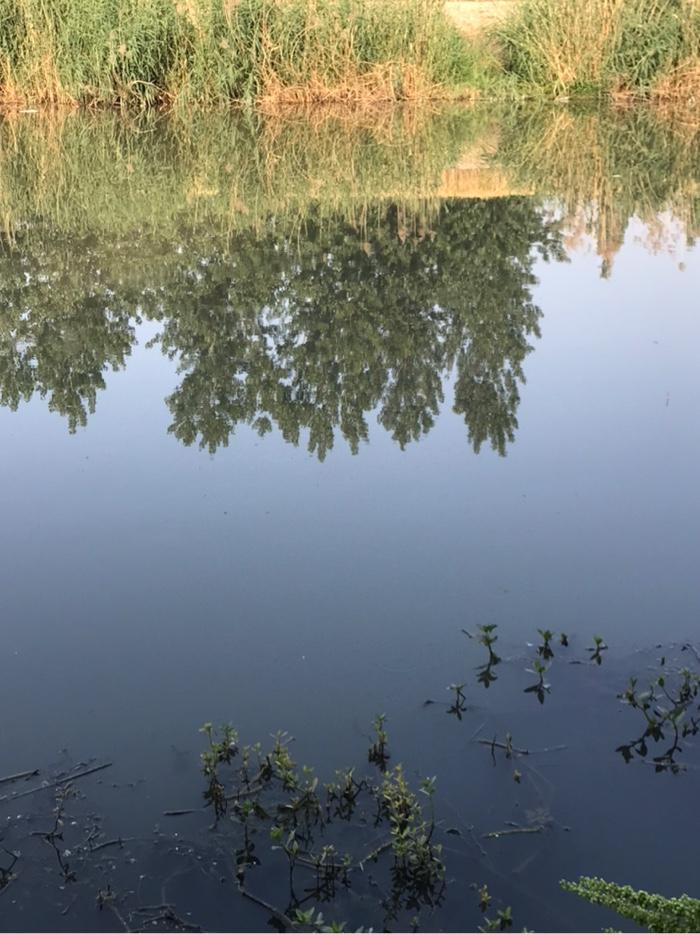 河面如镜面,没有一丝风。