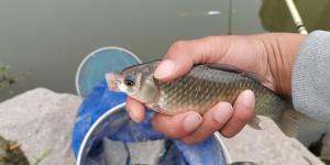 野釣調漂越靈敏越好?這不是別人收獲好的原因