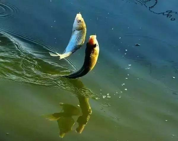 一种最灵活,最直接的钓法使用得当,渔获自然不会少插图(1)